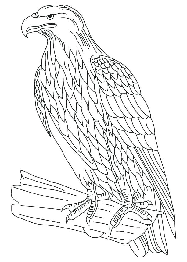 613x860 Coloring Pages Eagle Bald Eagle Coloring Page Coloring Pages