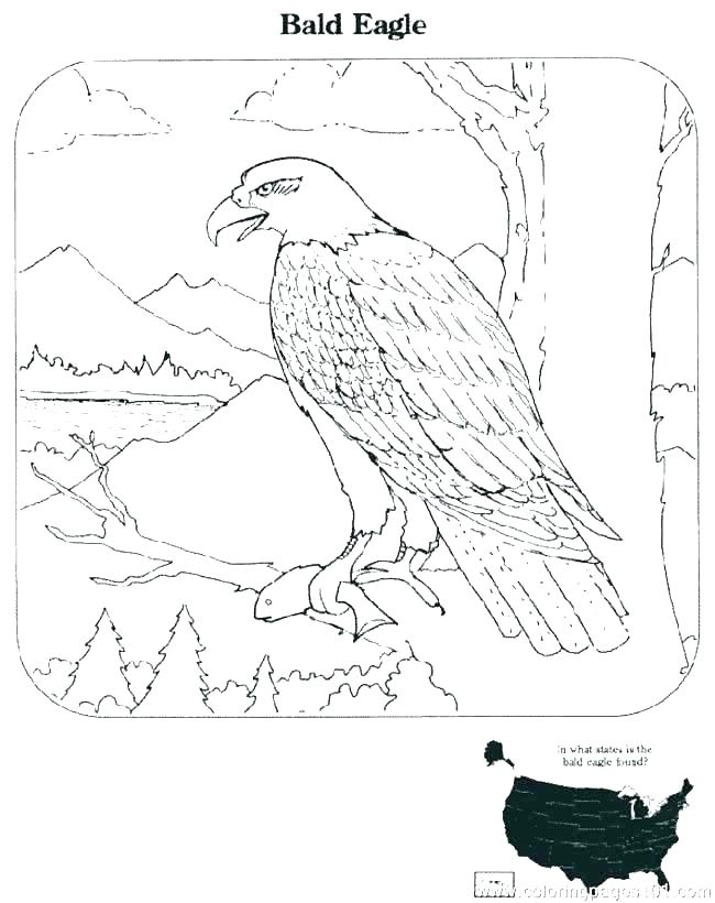 650x820 Bald Eagle Coloring Pages Printable Bald Eagle Color Sheet S Free