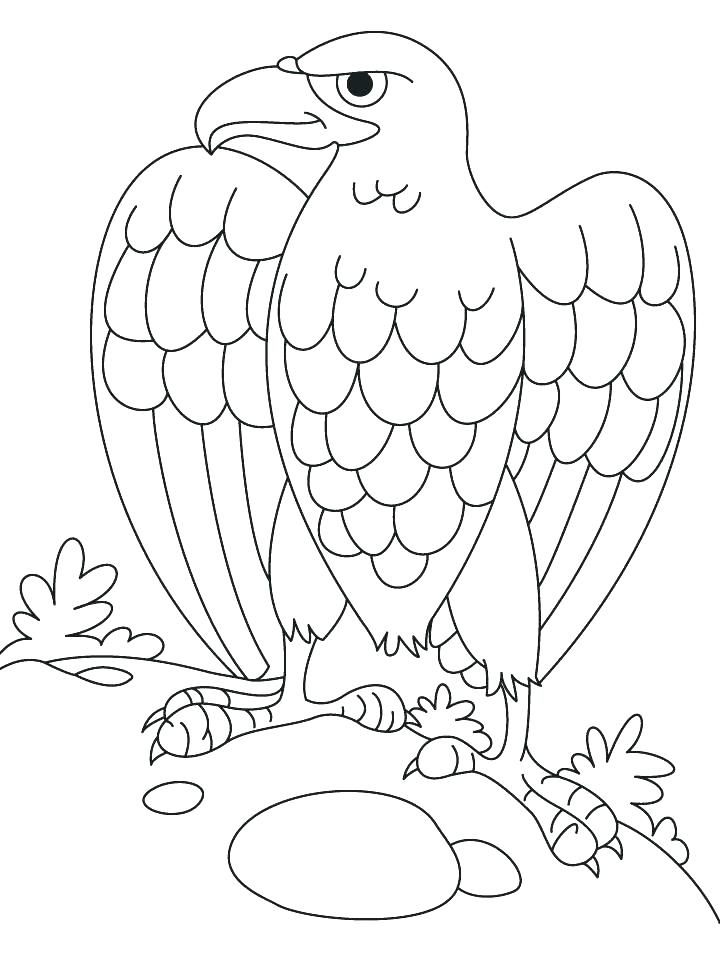 720x955 Coloring Pages Of Eagles Eagle Coloring Pages Harpy Eagle Coloring
