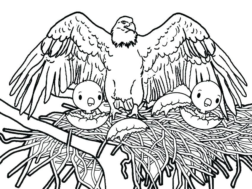 850x638 Eagle Coloring Pages Eagle Color Page Eagle Coloring Pages Me