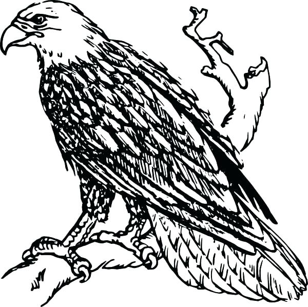 600x598 Eagles Coloring Pages Bald Eagle Coloring Page Free Best Pages