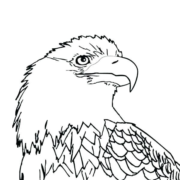 600x600 Philadelphia Eagles Coloring Pages Eagles Coloring Pages Coloring