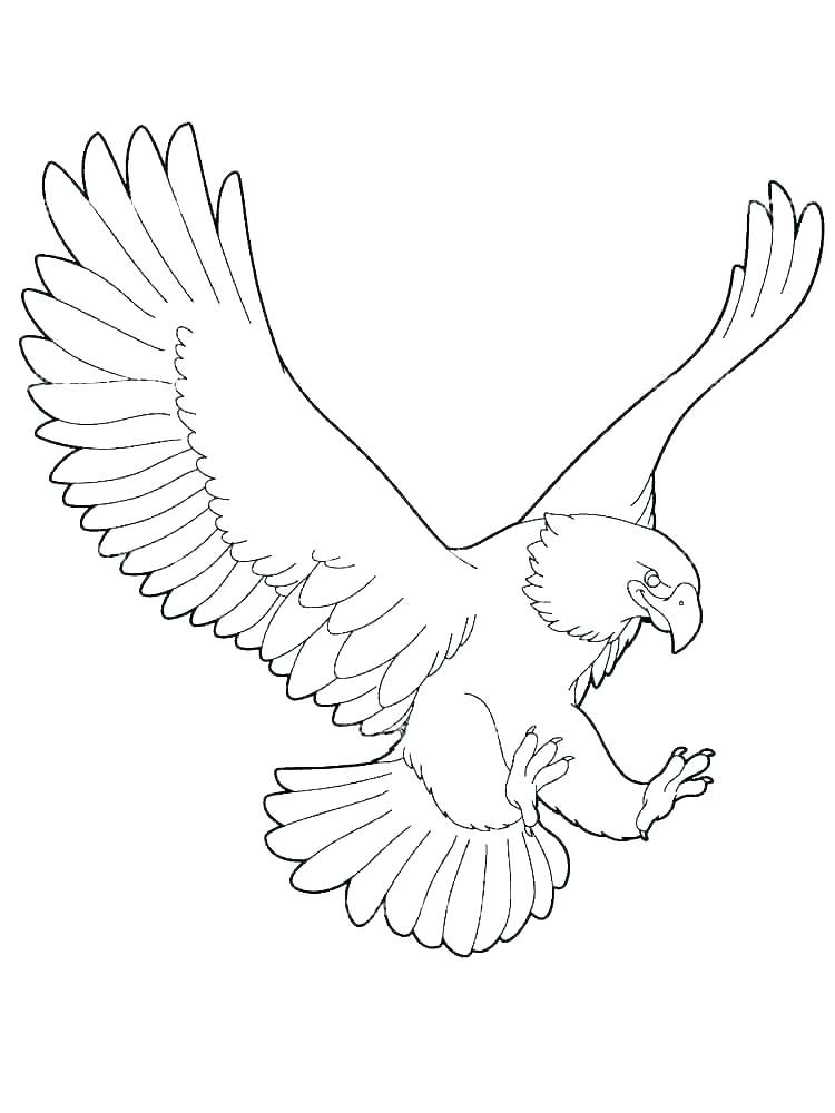 750x1000 Bald Eagle Coloring Pages Printable Eagle Coloring Page Bald Free