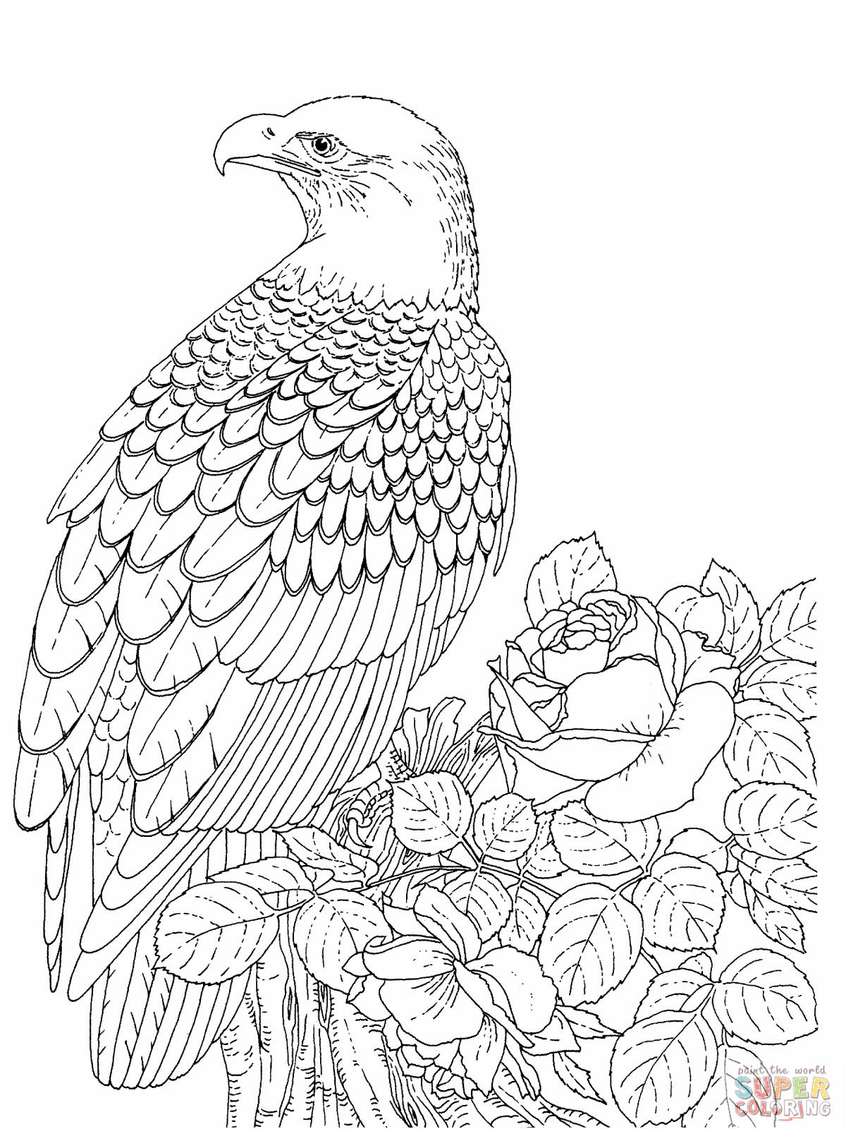 1200x1600 Bald Eagle Coloring Pages To Print For Picture