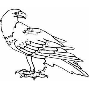 300x300 Calm Eagle Coloring Page