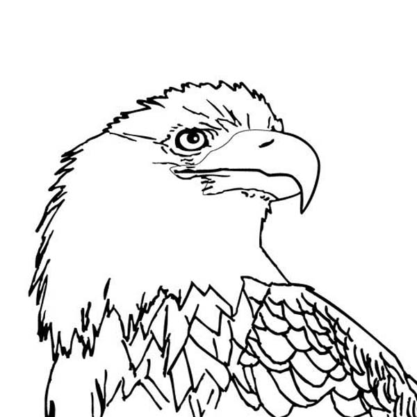 600x600 Bald Eagle With Smooth Feather Coloring Page
