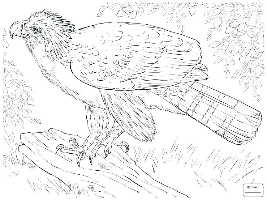 863x647 Feather Coloring Pages Feather Coloring Page Eagle Eagle Feather