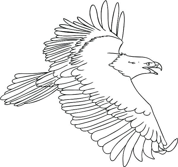 600x562 Bald Eagle Coloring Page Icontent