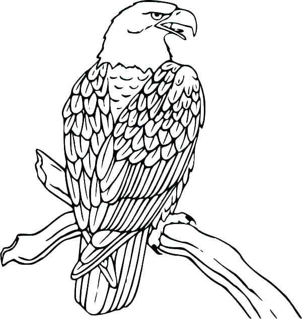 600x635 Harpy Eagle Coloring Page Professional