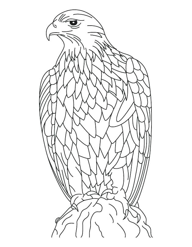 630x810 Eagle Coloring Page Bald Eagle With Smooth Feather Coloring Page