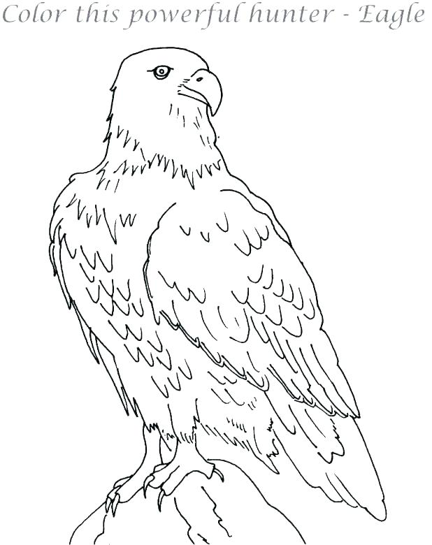 618x780 Eagle Coloring Page Ing Ing S Ing Eagle Feather Coloring Page