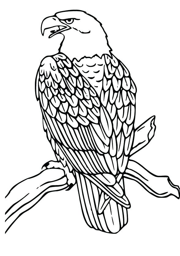 588x838 Eagle Coloring Page Flying Bald Eagle Coloring Pages Eagle Feather