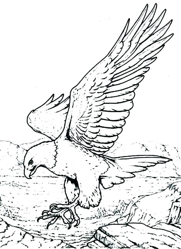 600x826 Eagle Coloring Pages Eagle Color Page Golden Eagle In Flight