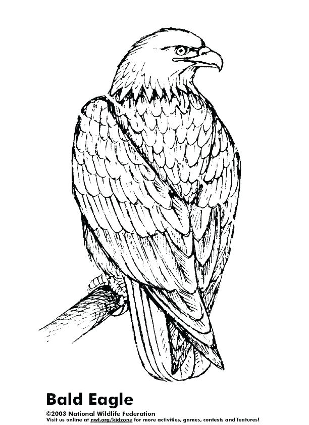 612x840 Bald Eagle Coloring Page Bald Eagle Coloring Pages For Kids