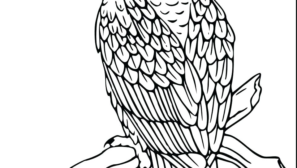 960x544 Coloring Pages Of Birds Animal Bald Eagle Coloring Pages Birds