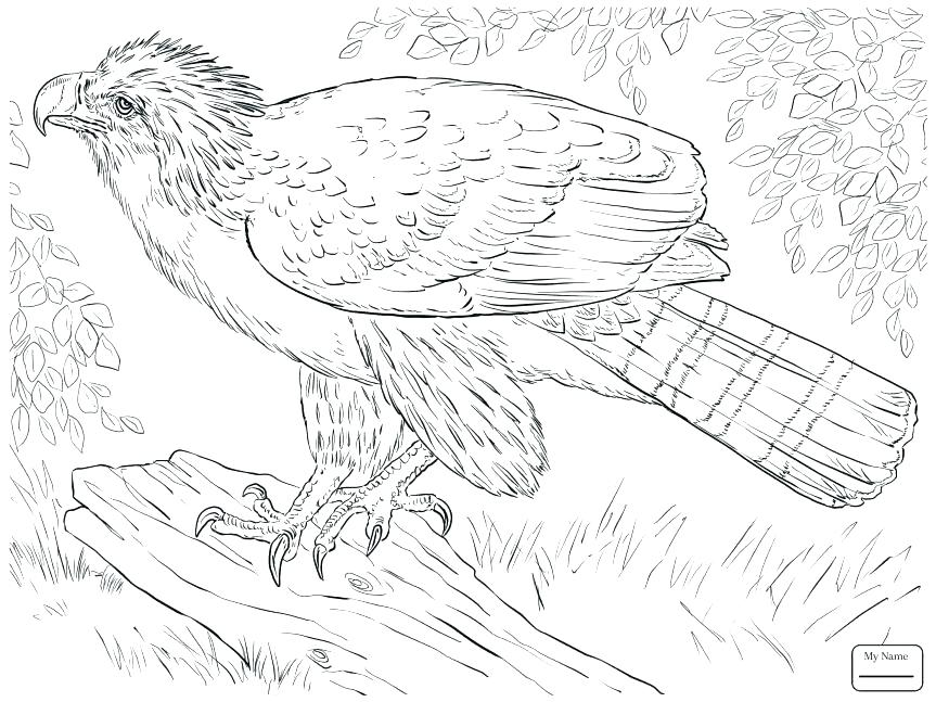 863x647 Eagle Color Page Bald Eagle Coloring Page Plus Hungry Bald Eagle