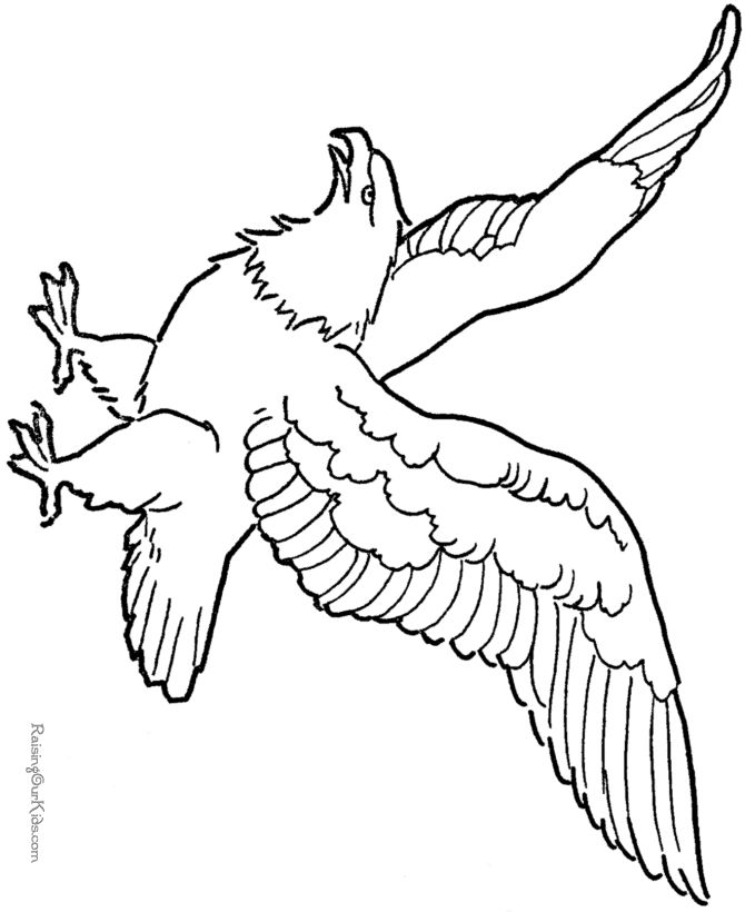 Eagle Printable Coloring Pages At Getdrawings Com Free For