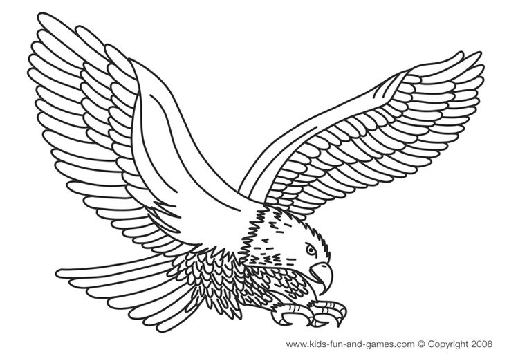 736x522 Eagle Printable Coloring Pages
