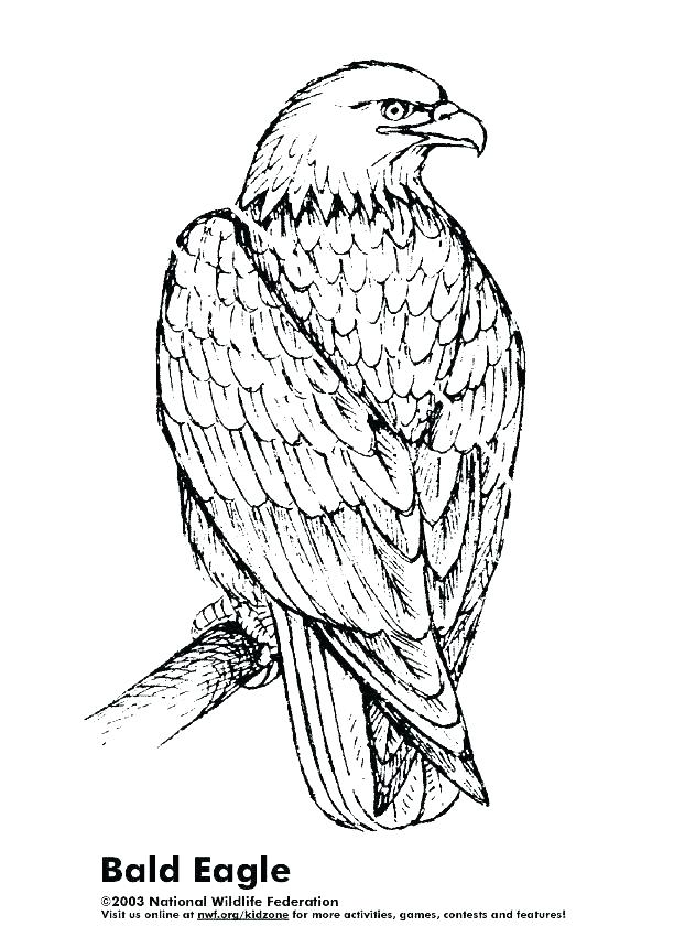 612x840 Eagle Printable Coloring Pages Harpy Eagle Coloring Page Color