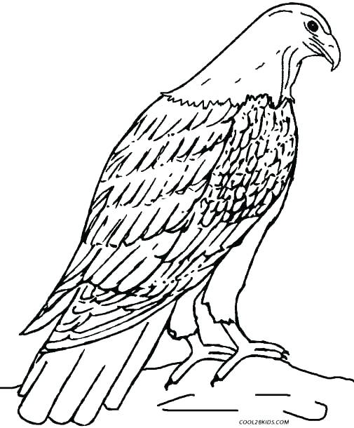 505x610 Golden Eagle Coloring Pages Printable Coloring Harpy Eagle