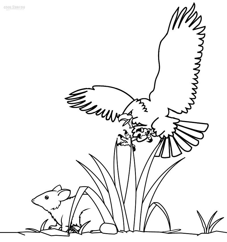 797x850 Printable Bald Eagle Coloring Pages For Kids Birds