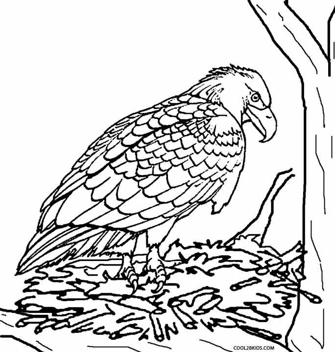 684x720 Printable Eagle Coloring Pages For Kids Birds