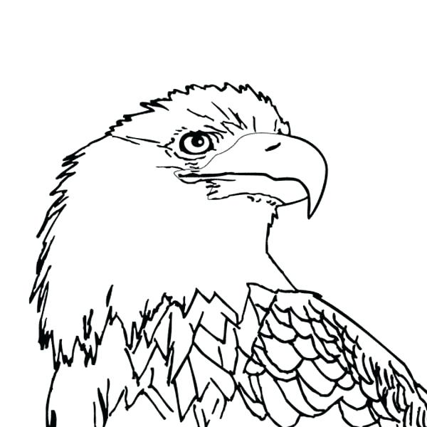 600x600 Wedge Tailed Eagle Colouring Pages Welding Wedge Wedge Tailed