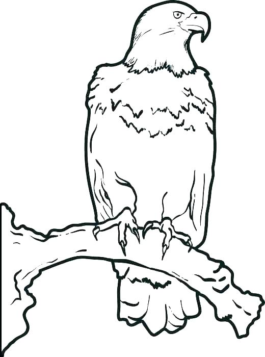 520x700 Coloring Pages Of Eagles