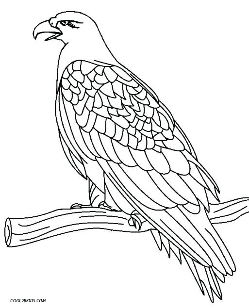 Eagles Logo Coloring Pages At Getdrawings Com Free For Personal