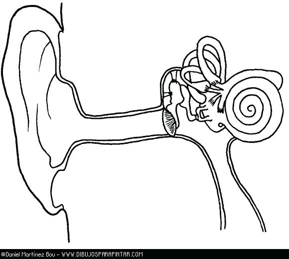 Ear Coloring Page