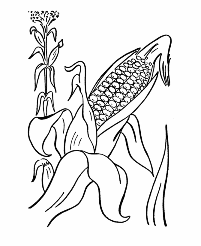 670x820 Corn Coloring Pages Inspirational Ear Corn Coloring Page Coloring