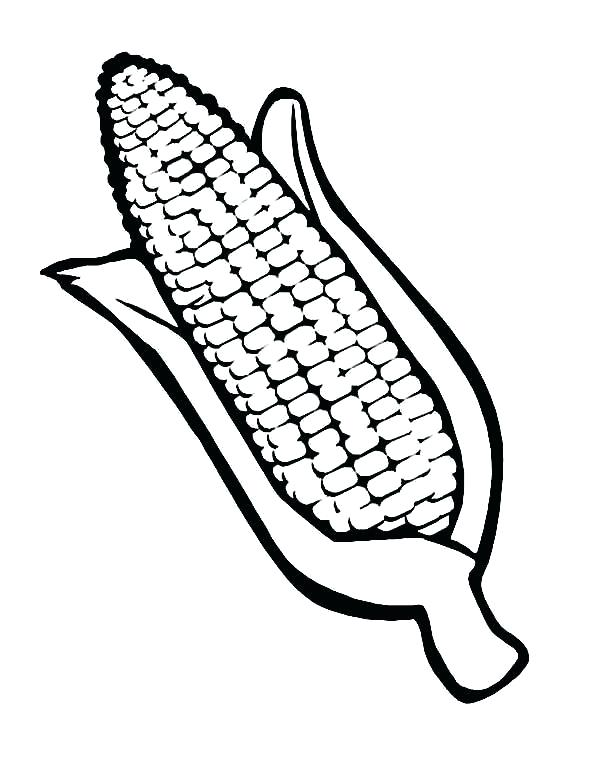 600x776 Ear Of Corn Coloring Page Corn Coloring Pages For Thanksgiving