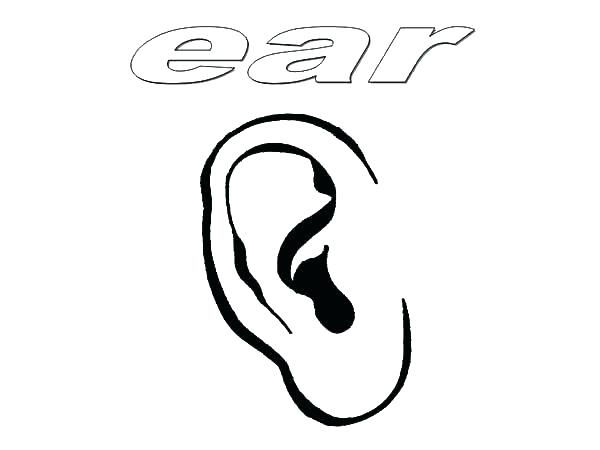 600x450 Ears Coloring Page Generous Ear Of Corn Coloring Page Photos