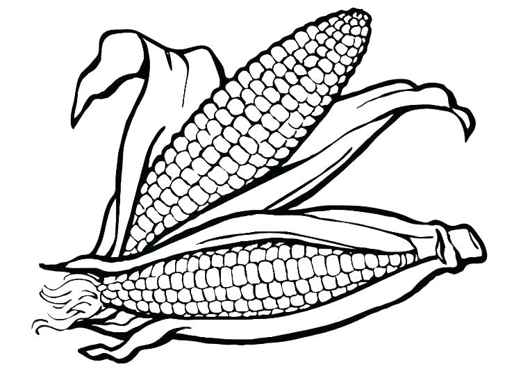 750x531 Popcorn Kernel Coloring Page Corn Coloring Pages Ear Of Corn