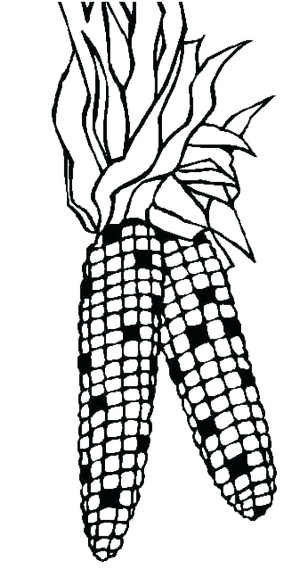 600x1106 Coloring Ear Of Corn Coloring Page Bunny Ears Printable Pa On P