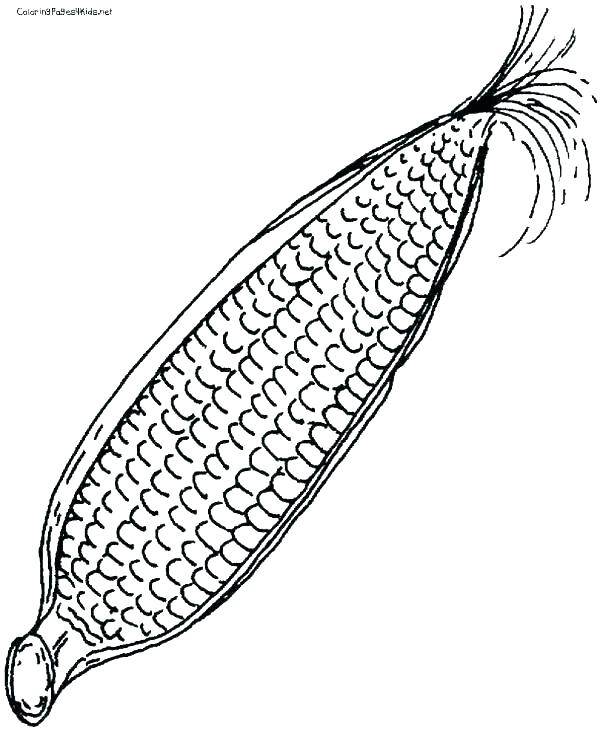 600x730 Corn Coloring Pages