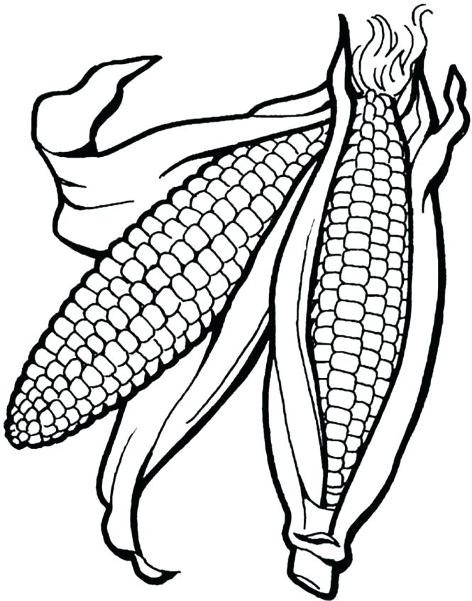 665x846 Ear Of Corn Coloring Page