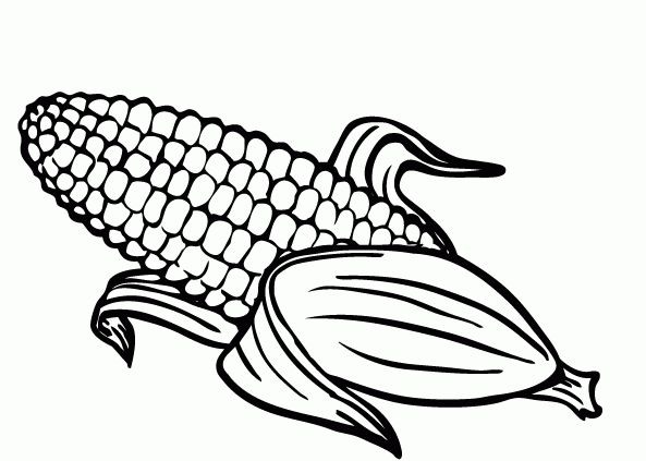 593x423 Coloring Picture Corn New Corn Coloring Page Fruits Images