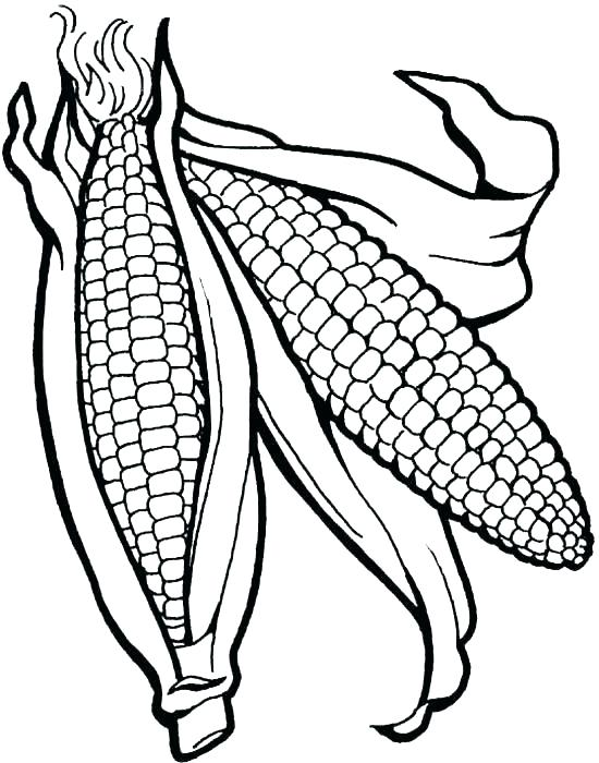 550x700 Corn Coloring Pages Free Printable Ear Of Corn Coloring Page
