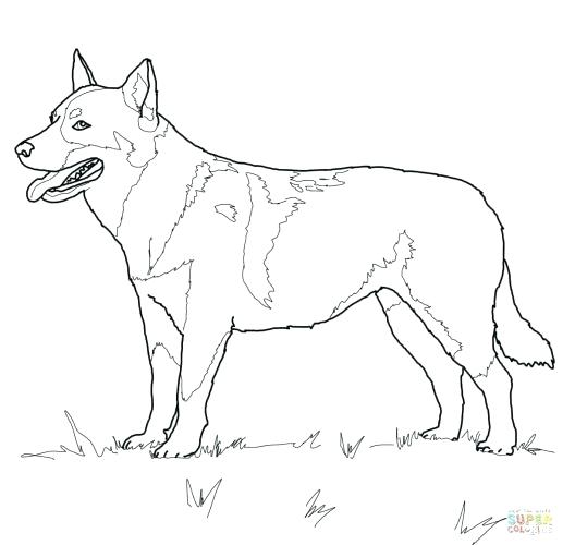 517x500 Beagle Coloring Pages Pound Puppies Coloring Pages Beagle Coloring
