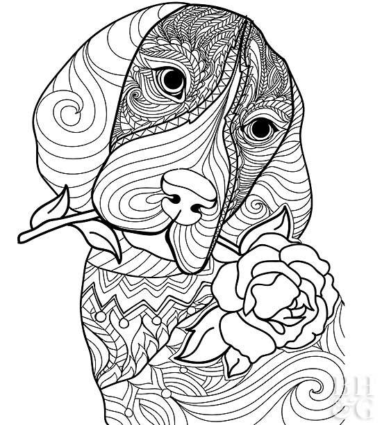 550x611 Pet Coloring Pages Better Homes Gardens
