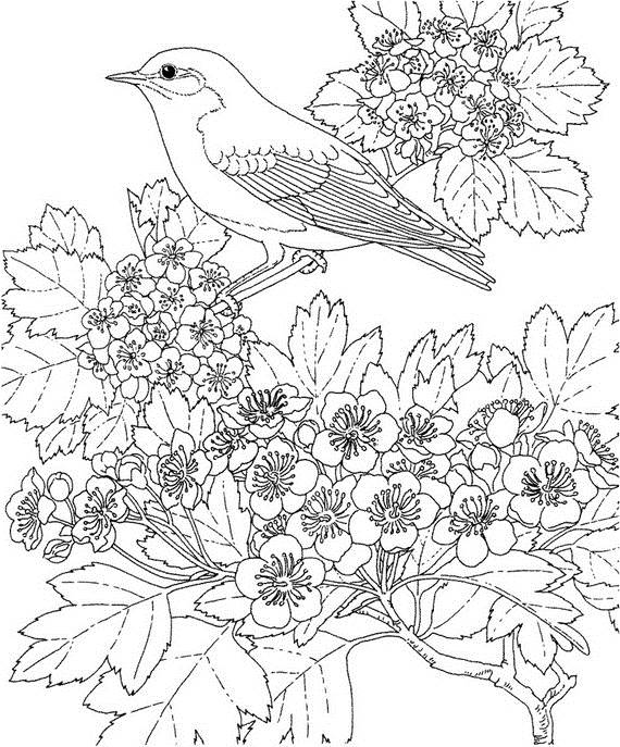 570x687 Unique Spring Easter Holiday Adult Coloring Pages Designs