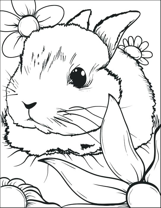 543x700 Bunny Color Page Rabbit Coloring Page Rabbits Coloring Pages