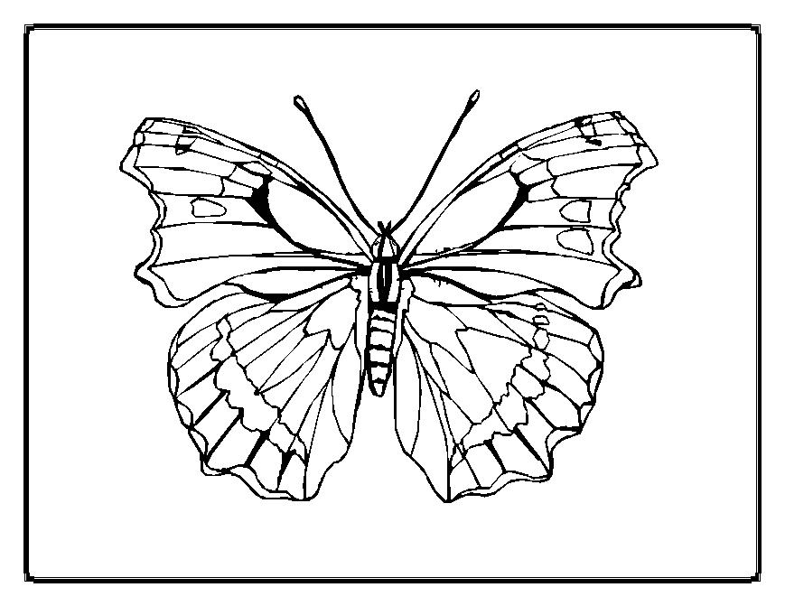 Easy Butterfly Coloring Pages At Getdrawings Com Free For Personal
