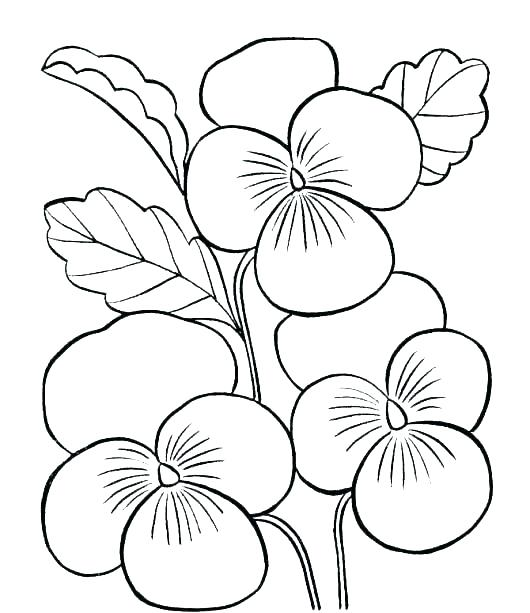 530x613 Free Printable Flower Coloring Pages Simple Flower Coloring Pages