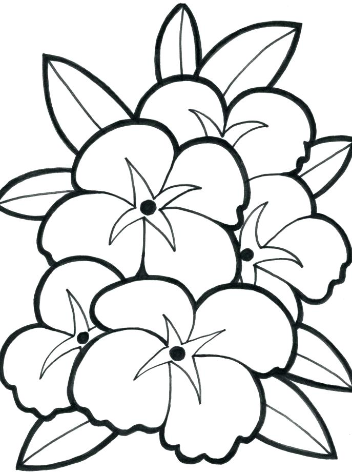 687x920 Coloring Pages Flowers Printable Sensational Design Print Out