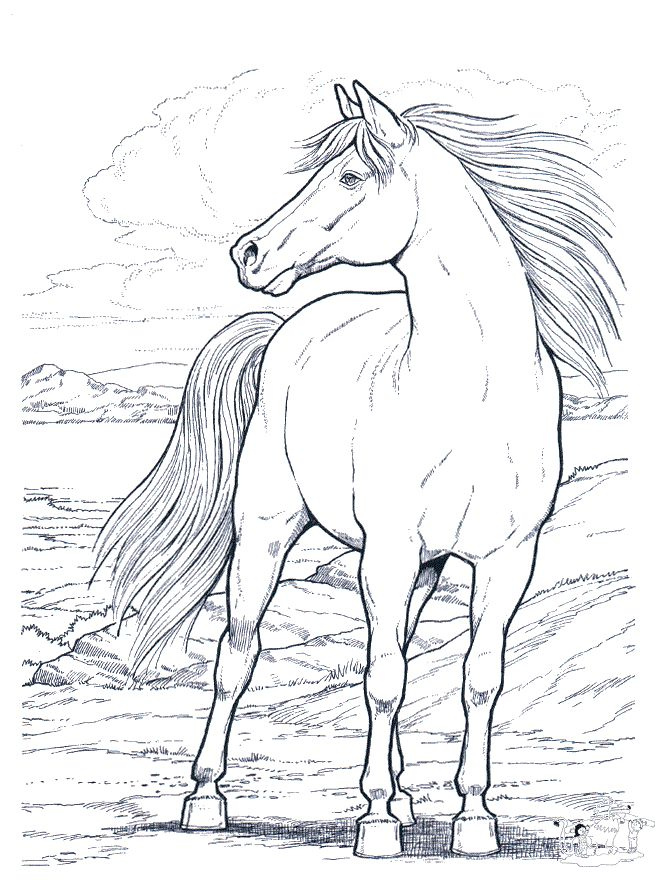 660x880 Sweet Horse Coloring Pages Printable Download