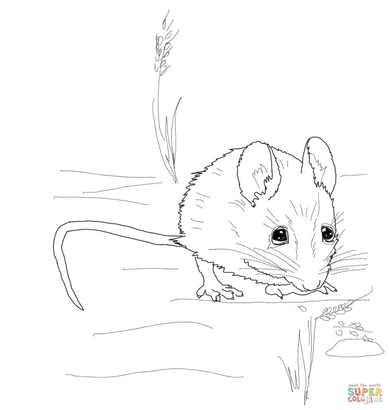 1302x1372 Easily Coloring Pages Of A Mouse Mice Free
