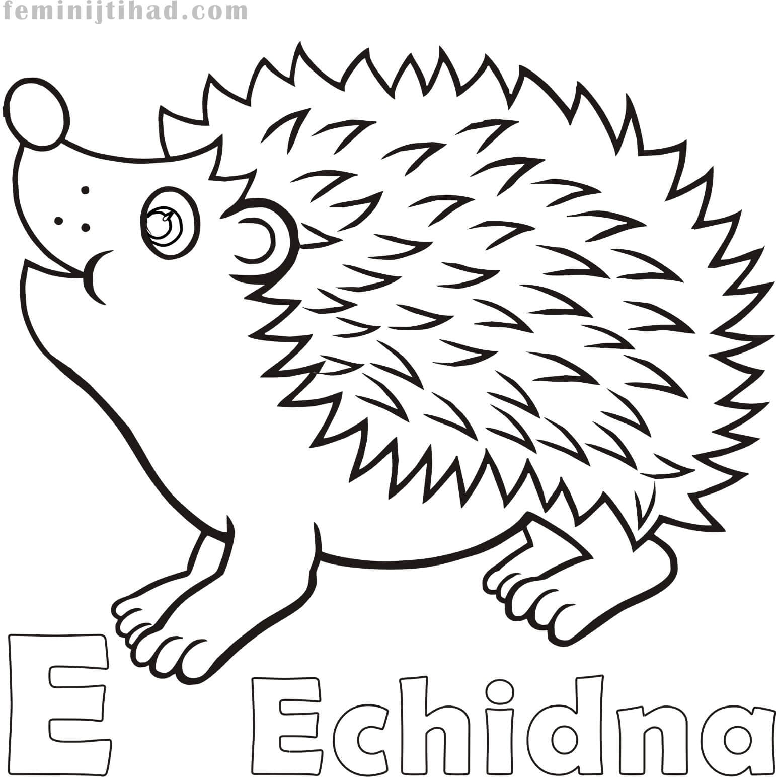 1542x1543 Free Echidna Coloring Pages Collection Coloring Pages For Kids