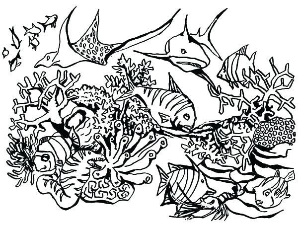 600x457 Coral Reef Coloring Page Coral Reef Coloring Pictures Ecosystem